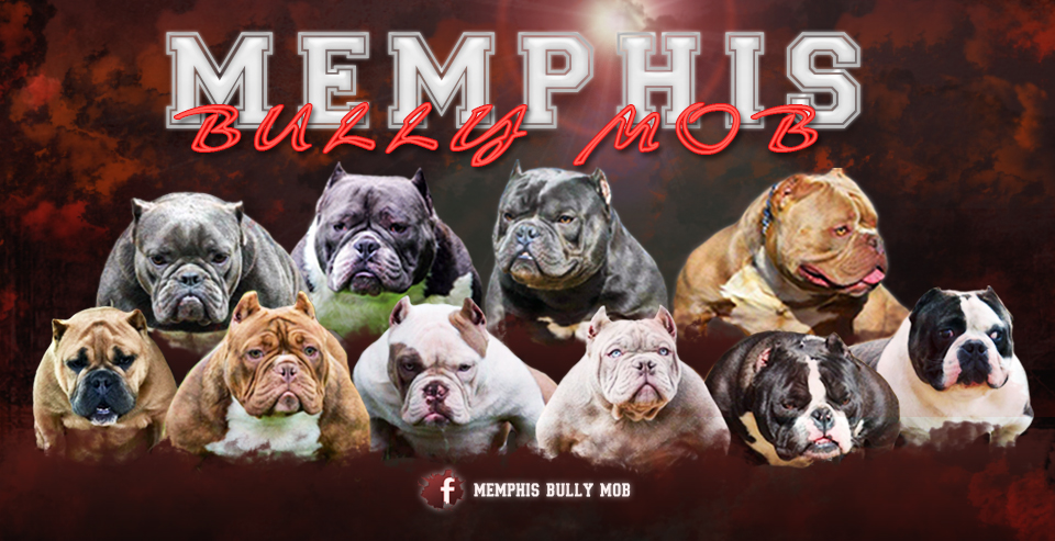 Home - Big Block Bullies